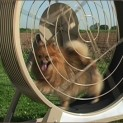 sub mainimg 123x123 GoPet Tread Wheel is a Hamster Wheel for Dogs