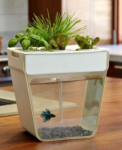 Aquarium 3 414x508 AquaFarm is an All in One Planter and Aquarium