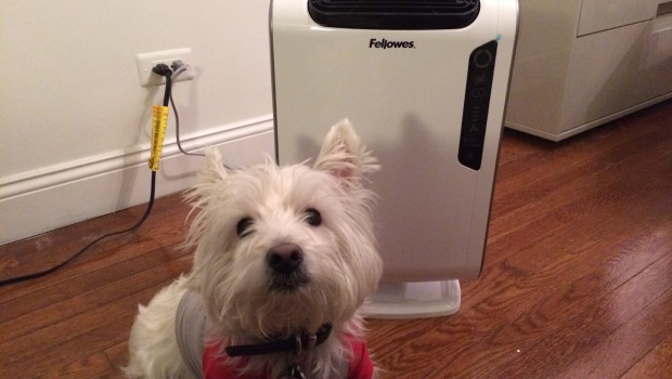 photo 21 620x350 Fellowes AeraMax™ DX 55 Air Purifier Helps Fight Cold Season   Review